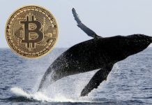 Bitcoin Whales Found To Be In Control of the Market