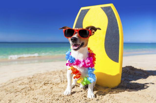 Dog Days Of Summer Amazon